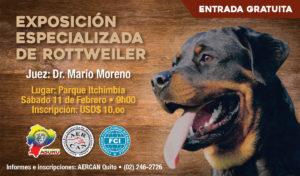 ESPECIALIZADA ROTTWEILER ENERO 2017