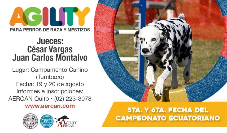 COMPETENCIA DE AGILITY AGOSTO 19 Y 20